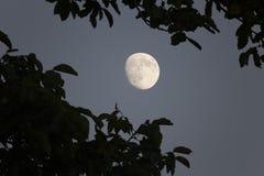 światło księżyca Obraz Stock