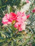 Światło kwiaty Obraz Stock