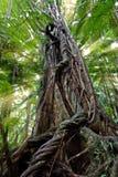 światło leśnych deszczu belki Obraz Royalty Free