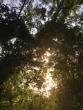 Światło nad liśćmi Zdjęcia Royalty Free