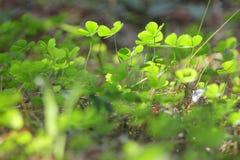 Światło natura zdjęcia stock