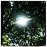 Światło przed drzewami leemie Zdjęcia Stock