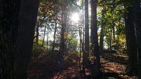 Światło przez drewien Zdjęcie Stock