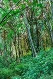 światło przez zwartego lasu zdjęcie stock
