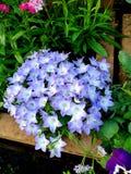 Światło - purpura kwitnie obok multicolor kwiatów obrazy stock