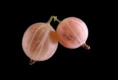 Światło - różowi agresty na ciemnym tle Smakowite menchie i dojrzali agresty Zdrowe lato jagody Obraz Royalty Free