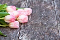 Światło - różowi tulipany na dębowym brązu stole Obraz Stock