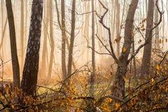 Światło słońce penetruje przez mgły w jesień lasowym Jaskrawym ranku w woods_ zdjęcia royalty free