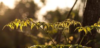 Światło słońce w ranku Fotografia Royalty Free