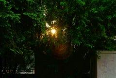 Światło słońce w wieczór przez gałąź akacja fotografia royalty free