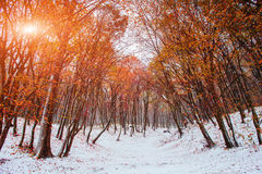 Światło słoneczne łama przez jesień liści drzewa w wczesnych dniach zima Zdjęcie Royalty Free