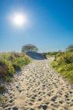 Światło słoneczne ścieżka na plaży Zdjęcie Royalty Free