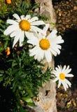 3 światło słoneczne Zdjęcie Stock