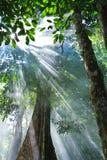 Światło słoneczne Obrazy Royalty Free