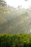 Światło słoneczne Fotografia Stock