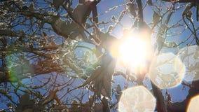 Światło słoneczne zdjęcie wideo