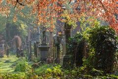 Światło słoneczne, grób i porost, Zdjęcia Stock