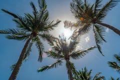 Światło słoneczne i drzewka palmowe zdjęcia royalty free