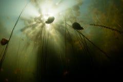 Światło słoneczne i leluja ochraniacze Podwodni w Nowa Anglia jeziorze zdjęcie stock