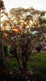 Światło słoneczne i natura Obrazy Stock