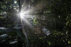 Światło słoneczne i tropikalny las deszczowy Obraz Stock
