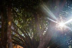 Światło słoneczne jaskrawy od drzew   piękna lato wiosna   światła słonecznego światło Zdjęcie Royalty Free