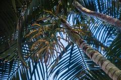 Światło słoneczne jaskrawy od drzew   piękna lato wiosna   światła słonecznego światło Obraz Stock