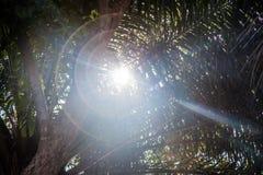 Światło słoneczne jaskrawy od drzew   piękna lato wiosna   światła słonecznego światło Fotografia Stock