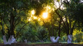 Światło słoneczne kraść przez liści drzewa zdjęcie stock