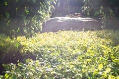 Światło słoneczne na naszywanych roślinach Fotografia Stock