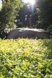 Światło słoneczne na naszywanych roślinach obrazy royalty free