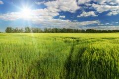 Światło słoneczne nad wiosny zieleni polem, Południowy Moravia, czech Zdjęcia Stock
