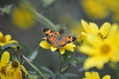 Światło słoneczne natury Motyliej świetności kwiatu Wysokiej Jakości insekty Zwierzęcy Zdjęcie Stock