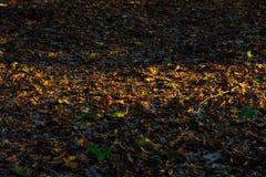 Światło słoneczne pasek na suchych jesień liściach Obrazy Stock