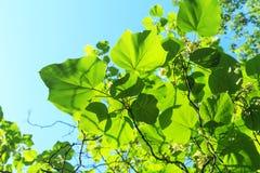 Światło słoneczne penetruje liście zdjęcia stock