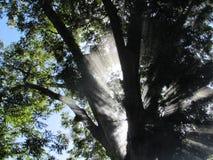 Światło słoneczne promienie Przez drzewa Obrazy Stock