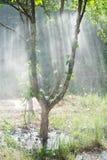 Światło słoneczne przez deszczu w ogródzie Zdjęcia Royalty Free