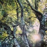 Światło słoneczne przez drzew Zdjęcie Stock