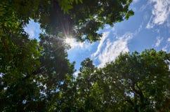 Światło słoneczne przez drzew Zdjęcie Royalty Free