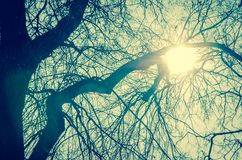 Światło słoneczne przez drzew obraz royalty free
