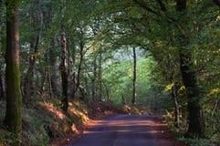 Światło słoneczne przez drzew obrazy stock