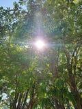 Światło słoneczne Przez drzewa zdjęcie stock