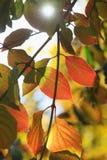 Światło słoneczne przez drzewa fotografia stock