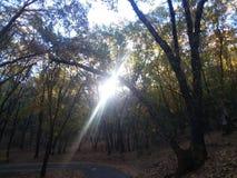 Światło słoneczne przez Forrest zdjęcia royalty free