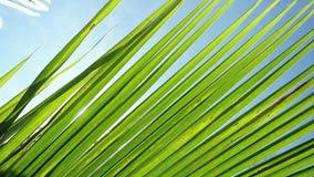 Światło słoneczne przez palmowych liści na słońca tle z obiektywu racy skutkami w zwolnionym tempie 1920x1080 zdjęcie wideo