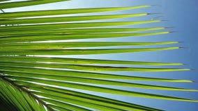 Światło słoneczne przez palmowych liści z słońca tłem z obiektywu racy skutkami w zwolnionym tempie 1920x1080 zbiory