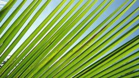 Światło słoneczne przez palmowych liści z słońca tłem z obiektywu racy skutkami w zwolnionym tempie 1920x1080 zbiory wideo