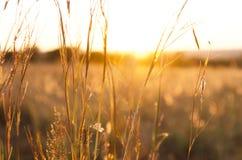 Światło słoneczne przez trawiastego pola Zdjęcia Royalty Free
