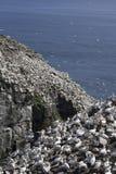 Światło słoneczne przy przylądka St ` s Maryjną Ekologiczną rezerwą Zdjęcie Royalty Free