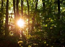 Światło słoneczne przy zmierzchem przez zielonych drzew w lato lesie, tło natury świeżość obrazy royalty free